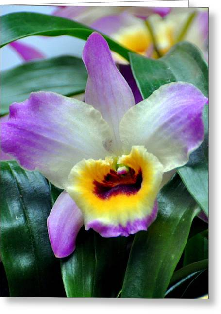Orchid 34 Greeting Card by Marty Koch