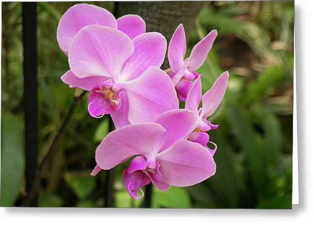 Greeting Card featuring the photograph Orchid #6 by Michael Colgate