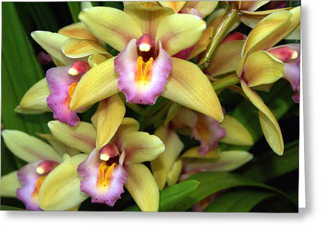 Orchid 7 Greeting Card by Marty Koch