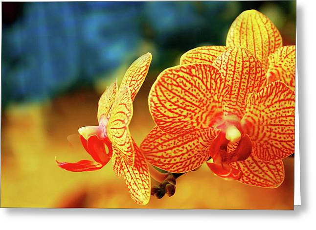 Orchid 9 Greeting Card by Chaza Abou El Khair