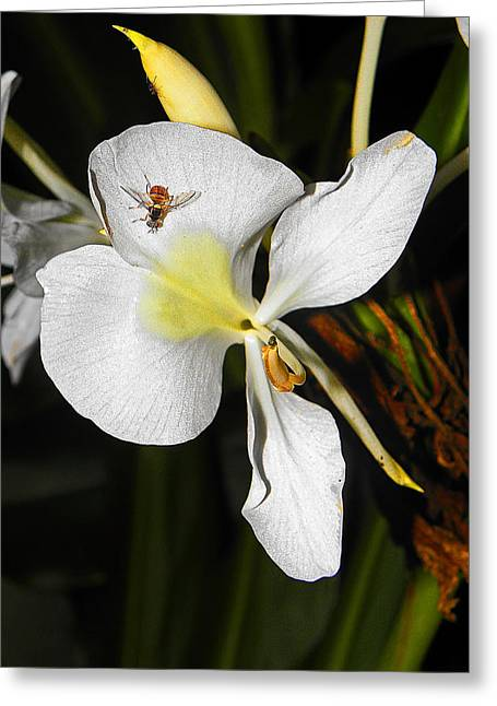 Orchid And Friend Greeting Card