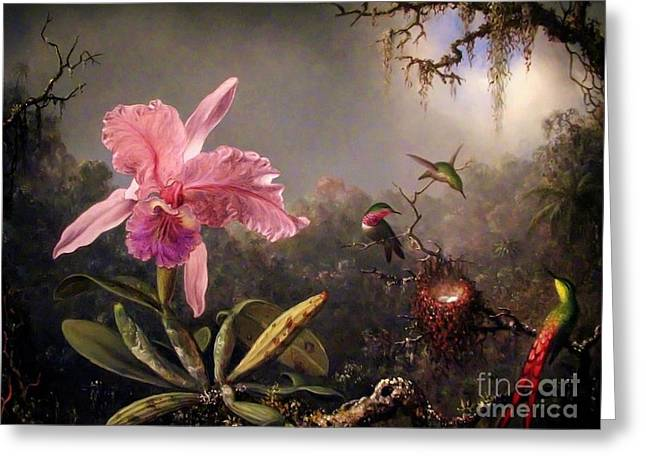 Pd Greeting Cards - Orchid and three Brazilian Hummingbirds Greeting Card by Pg Reproductions