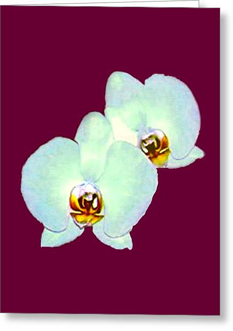 Orchid Art 5 Purple Zurich 2000 Jgibney The Museum Zazzle Gifts Greeting Card by jGibney