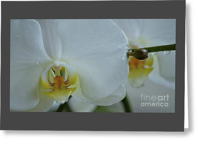 Pure Orchid Art Greeting Card by Poet's Eye