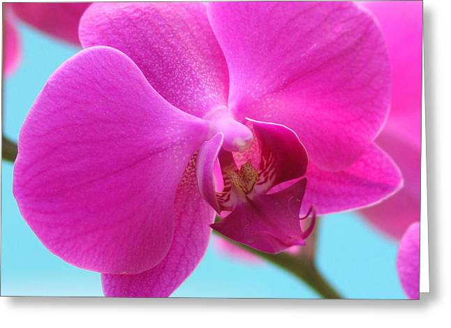 Orchid At The Ocean Closeup Greeting Card by Michi Sherwood