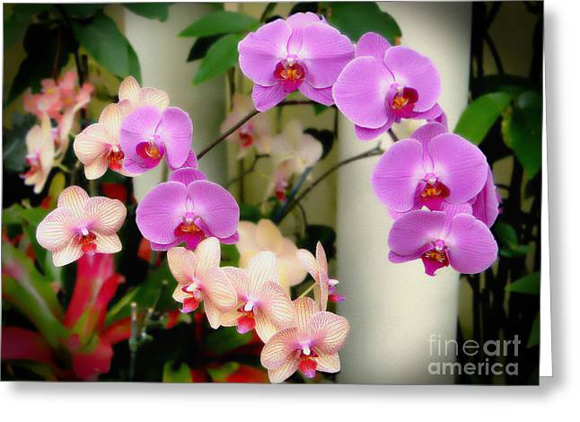Greeting Card featuring the photograph Orchid Beauties by Sue Melvin