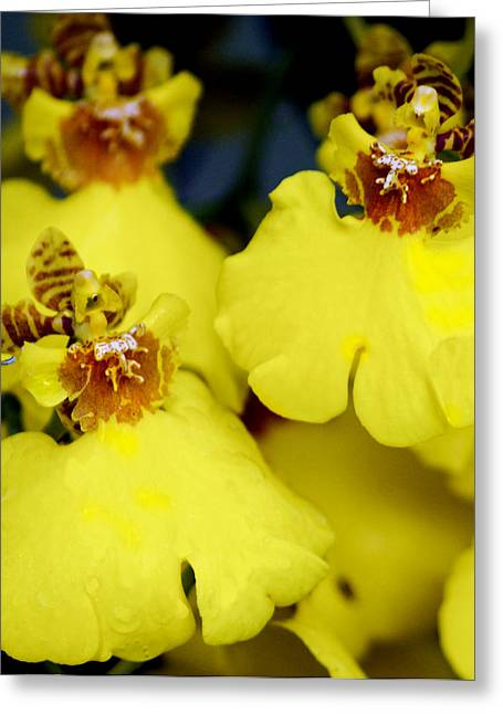 Orchid Beauty Greeting Card by Robert OP Parrish
