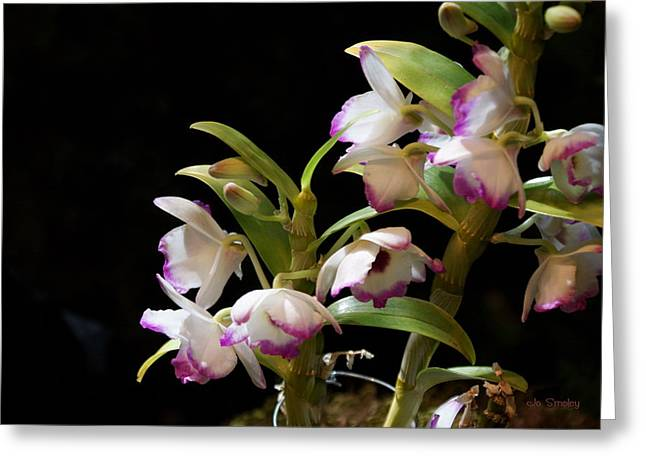 Orchid Blooms Greeting Card by Joanne Smoley