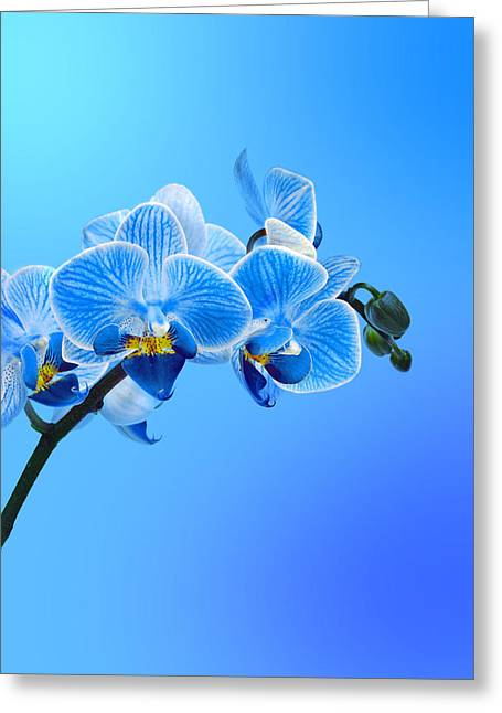 Orchid Blue Greeting Card by Mark Rogan