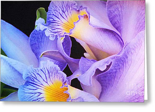 Orchid Bouquet Greeting Card by Cindy Manero