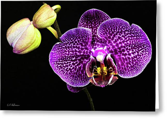 Orchid Greeting Card by Christopher Holmes