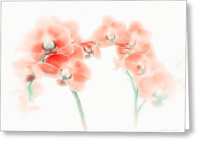 Orchid Collection 'soft Red' Greeting Card