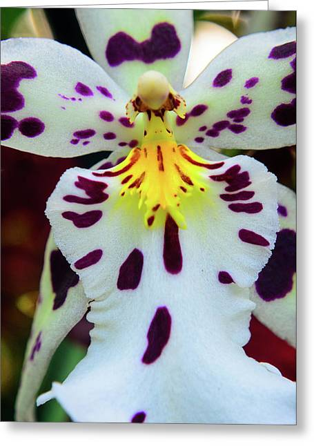Orchid Cross Greeting Card