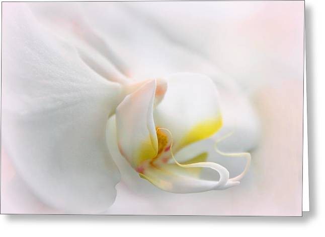 Orchid Curves Greeting Card by Jessica Jenney