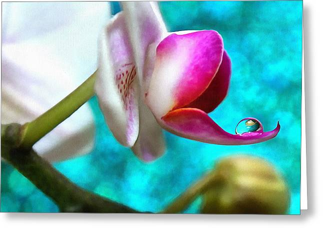Orchid Delicacy Greeting Card by Krissy Katsimbras
