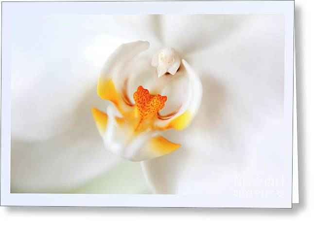Greeting Card featuring the photograph Orchid Detail by Ariadna De Raadt