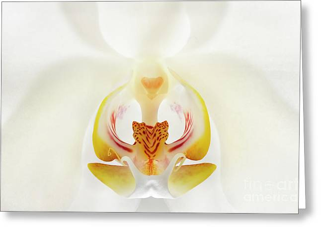 Orchid Detail Greeting Card