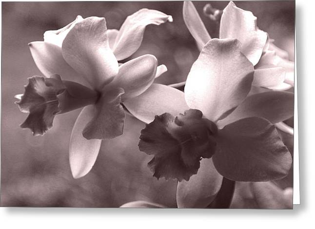 Greeting Card featuring the photograph Orchid Dream - Square by Kerri Ligatich