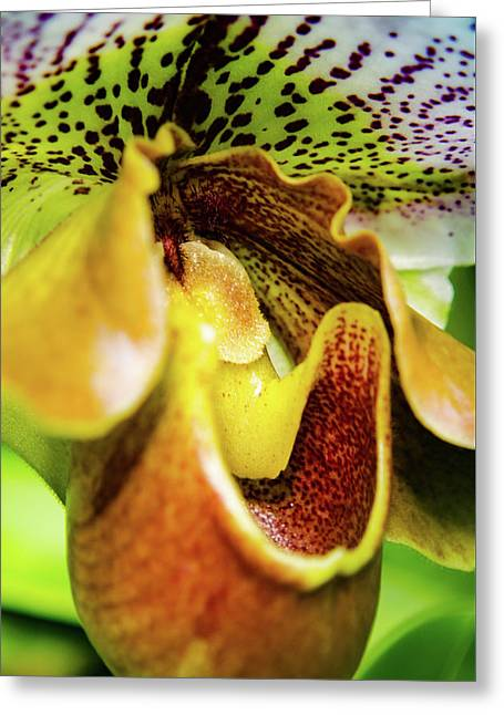 Orchid Faces Greeting Card