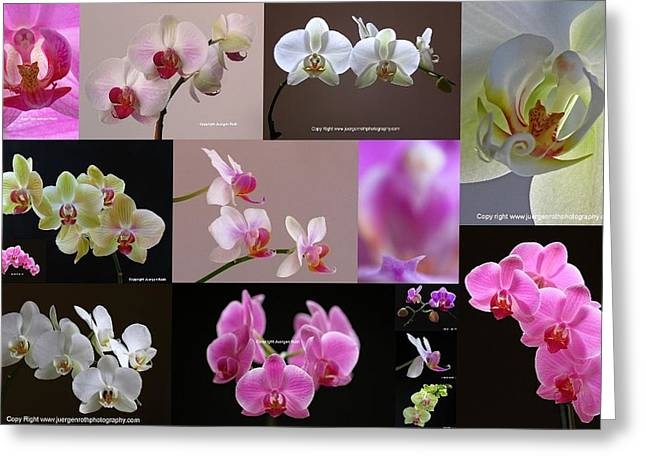Orchid Fine Art Flower Photography Greeting Card by Juergen Roth