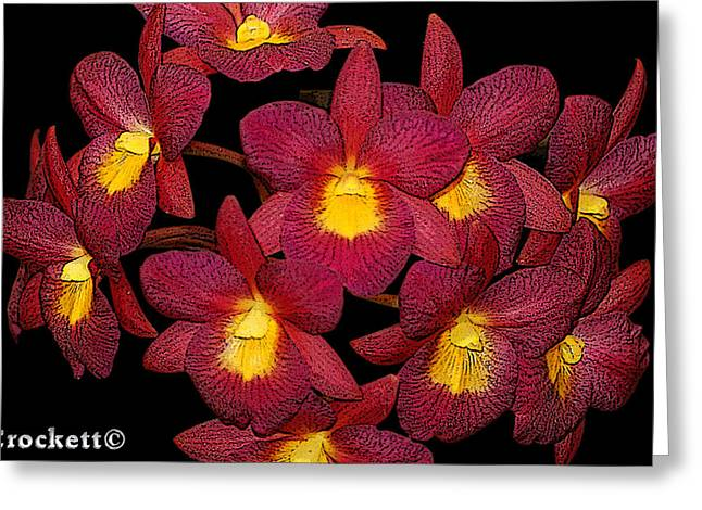 Orchid Floral Arrangement Greeting Card by Gary Crockett