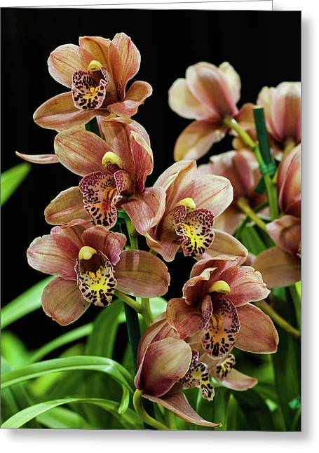 Greeting Card featuring the photograph Orchid Flowers  by Catherine Lau