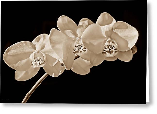 Orchid Flowers In Sepia Greeting Card by Jennie Marie Schell