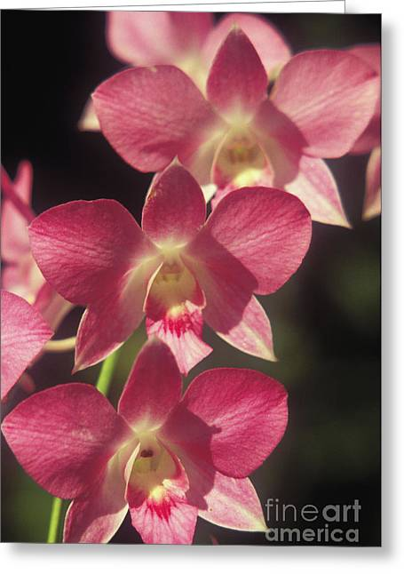 Orchid Flowers Greeting Card by Kyle Rothenborg - Printscapes