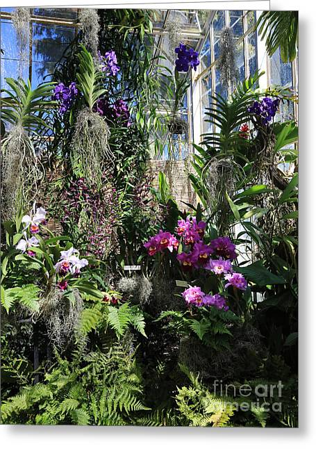 Orchid Greenhouse Greeting Card