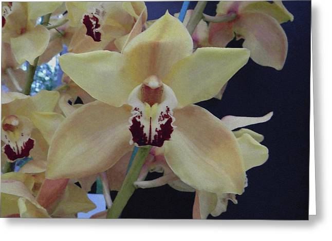 Greeting Card featuring the photograph Orchid Impression by Manuela Constantin
