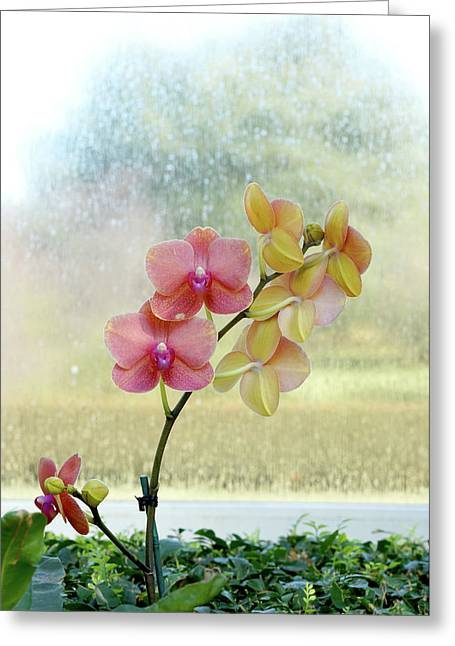 Orchid In Portrait Greeting Card