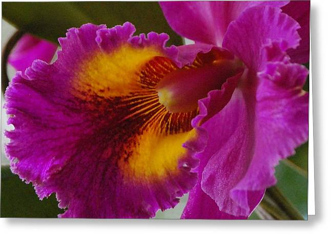 Greeting Card featuring the photograph Orchid In The Wild by Debbie Karnes