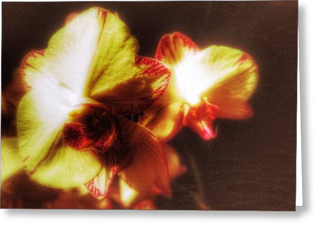 Greeting Card featuring the photograph Orchid by Isabella F Abbie Shores FRSA
