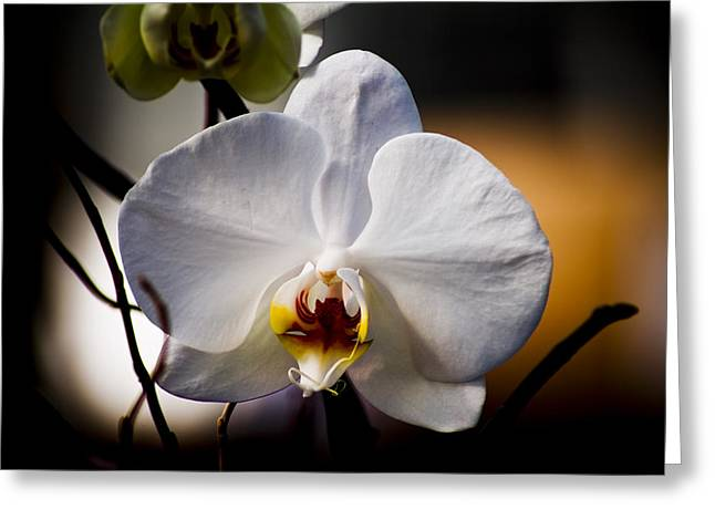 Orchid Greeting Card by John Ater