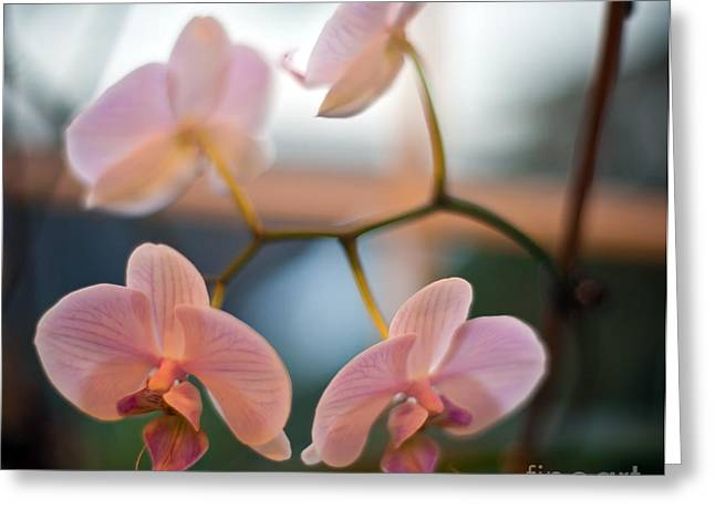 Orchid Menage Greeting Card by Mike Reid