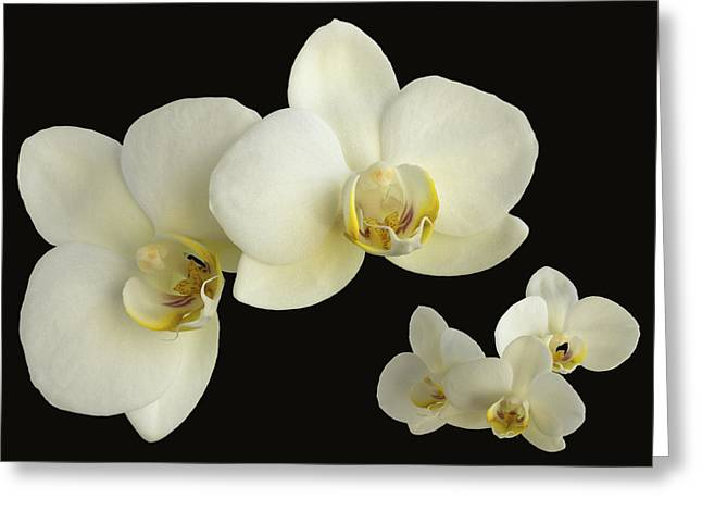 Orchid Montage Greeting Card
