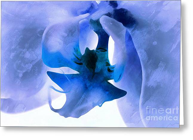Orchid Of Blue Greeting Card