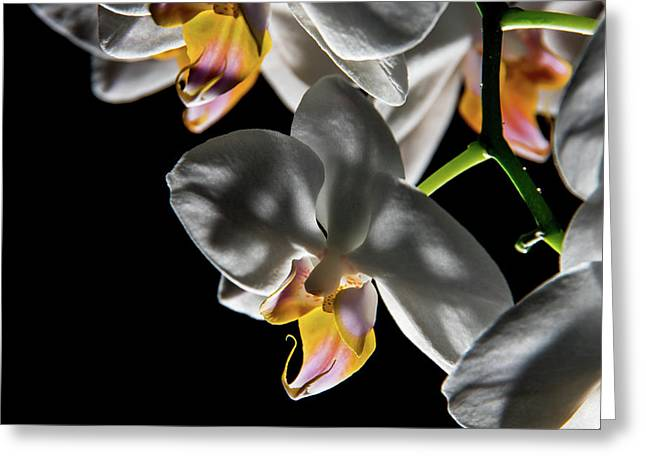 Orchid On Fire Greeting Card