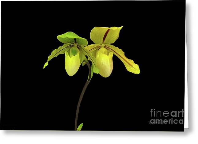 Orchid Paphiopedilum Druid Spring Greeting Card