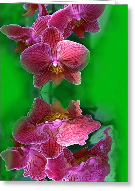 Orchid Refelctions  Greeting Card by Tony Craddock