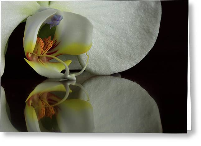 Orchid Reflected Greeting Card