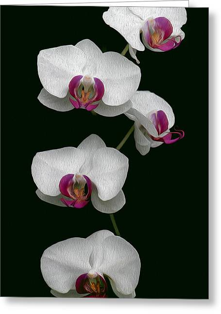 Orchid Sequence  Greeting Card