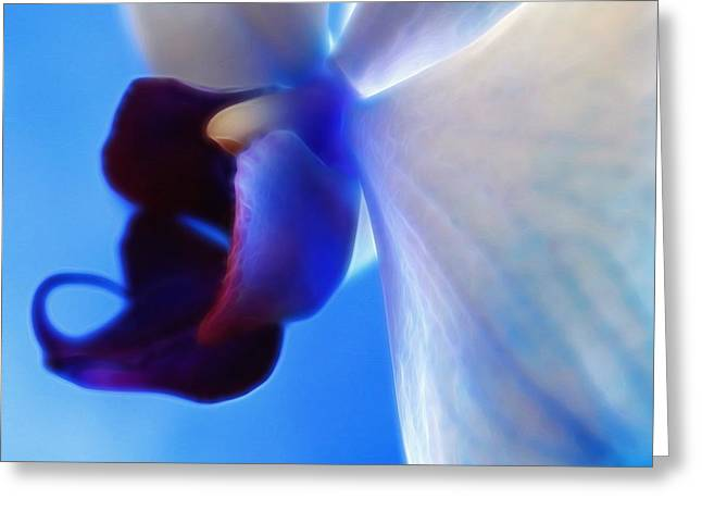Orchid Serenity Greeting Card