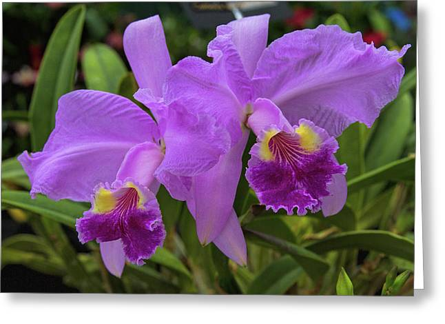 Orchid Show 10 Greeting Card