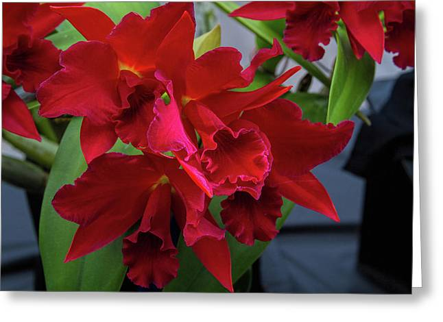 Orchid Show 13 Greeting Card