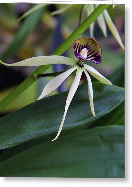 Orchid Show 9 Greeting Card