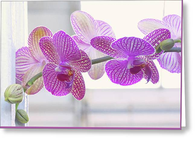 Orchid Spray Greeting Card