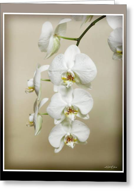 Orchid Spray Greeting Card by Linda Olsen
