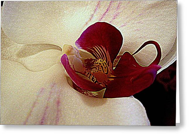 Orchid Symmetry Greeting Card