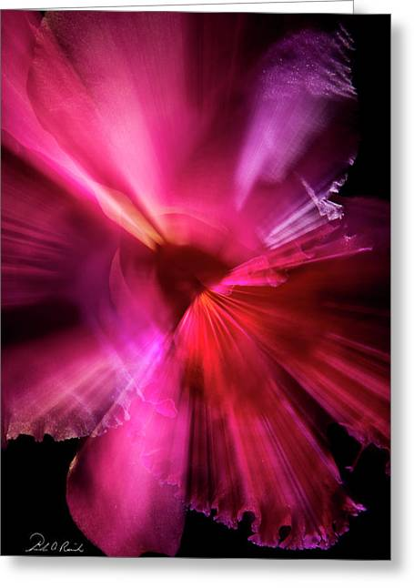 Orchid Time Warp Greeting Card by Frederic A Reinecke